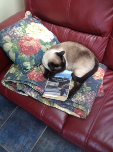 Emir, literary feline critic