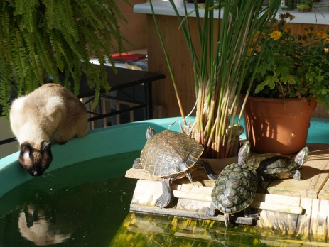 Emir and turtles share the sunshine and water