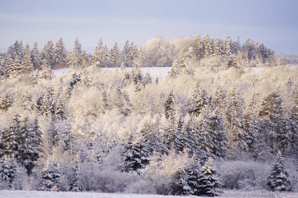 Odessa Winter scene 2015