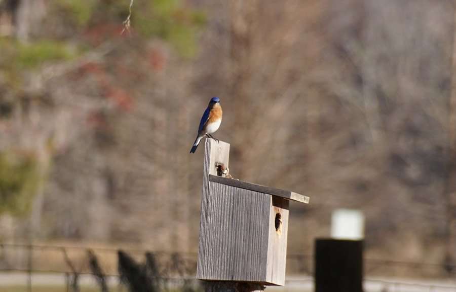2016 FL bluebird