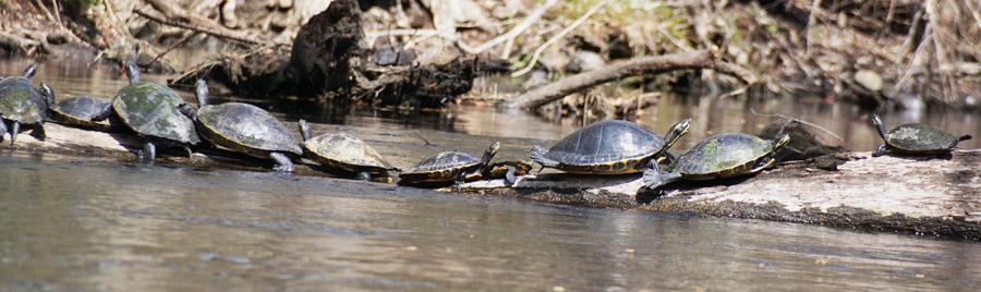 2016 Florida Turtles-2e